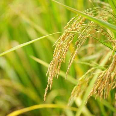 Sljedeći tjedan počinje isplata izravne potpore poljoprivrednicima