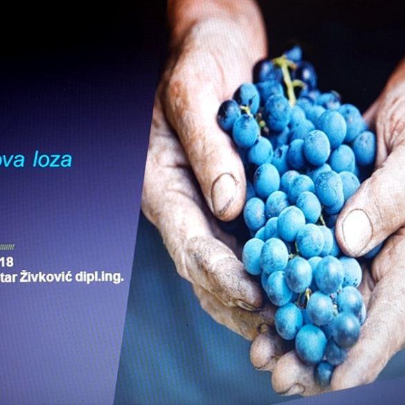 U Bukovlju održano predavanje o pojavi 'Zlatne žutice' u vinogradima