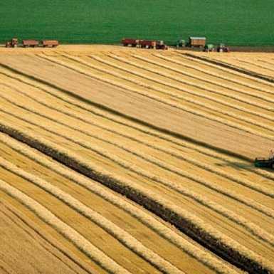 EU kviz- Mogućnosti za mlade poljoprivrednike