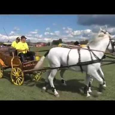 Vrani se konji igrali ove nedjelje u Gundincima