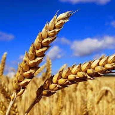 136 milijuna kuna za 366 projekata mladih poljoprivrednika