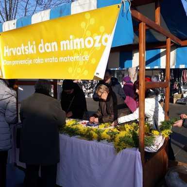 Obilježen Dan mimoza