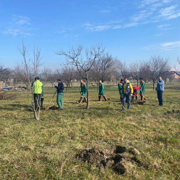 'Zasadi stablo, ne budi panj' u općini Sibinj