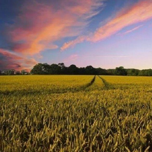 Na adrese poljoprivrednika poslani novi ugovori vrijedni gotovo 25 milijuna kuna