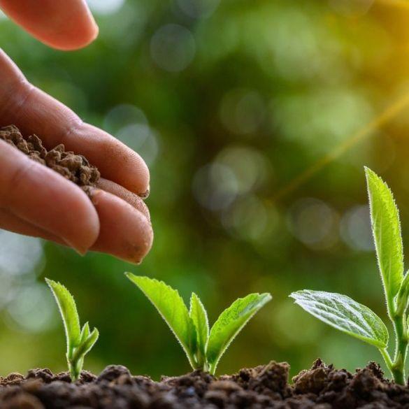 21. rujna - Međunarodni je dan sadnje drveća