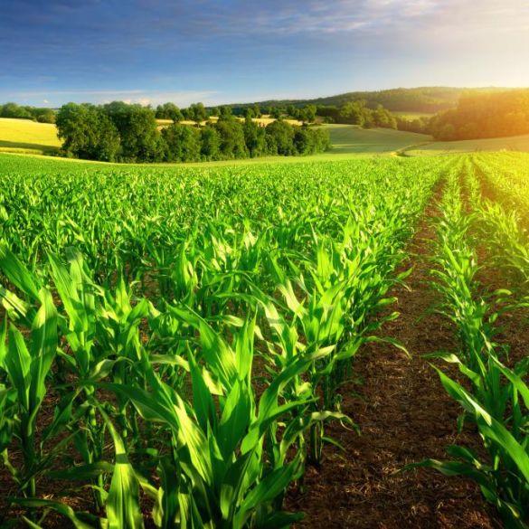 Financiranje programa i projekata udruga koje promiču poljoprivredu