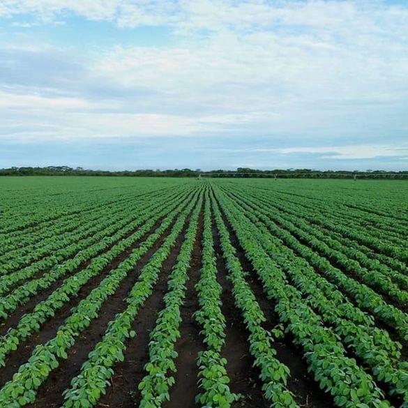 Na adrese 235 poljoprivrednika poslani novi ugovori